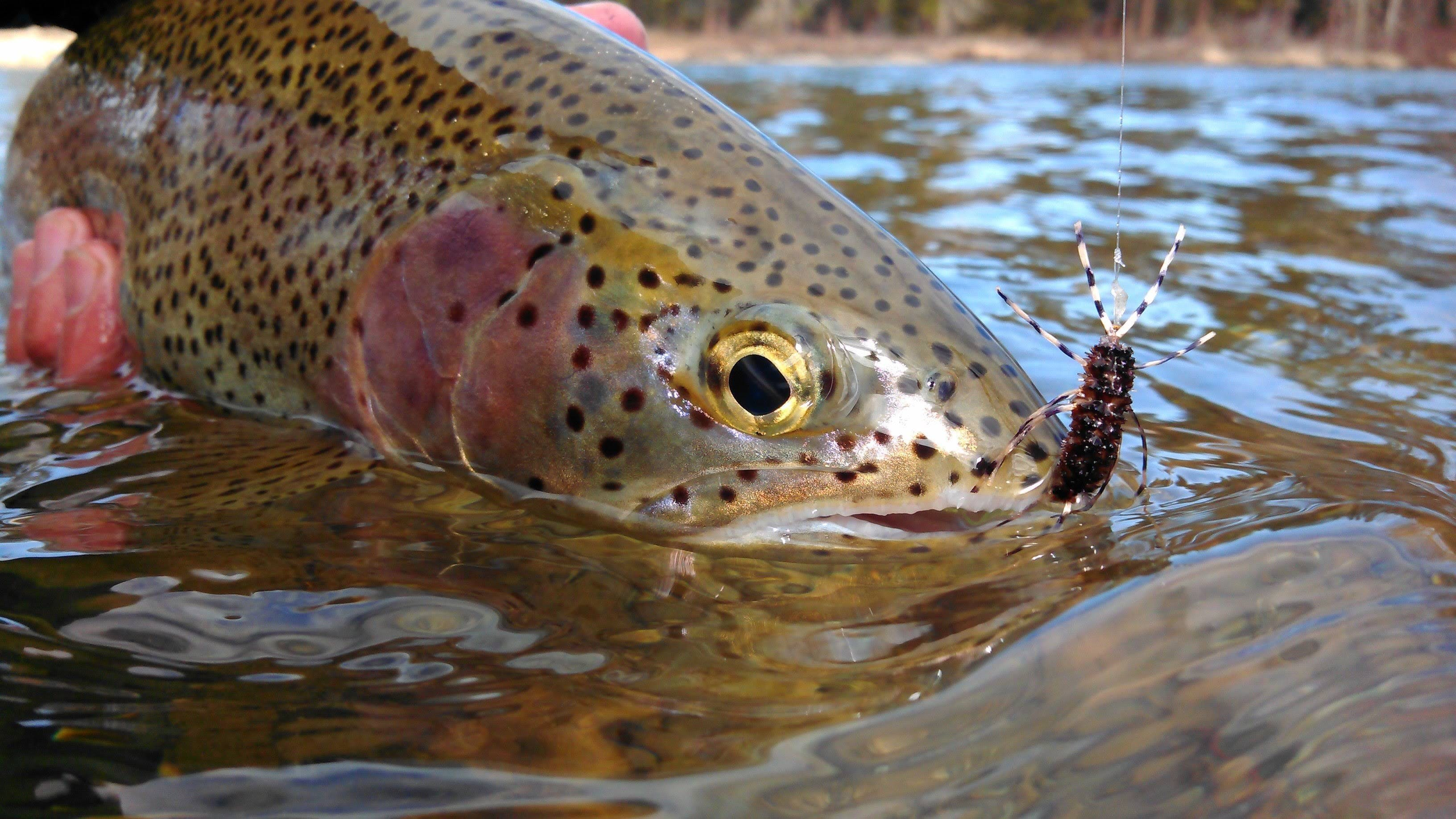 Nymphs for Trout // Deadly Dozen Custom Fly Selection
