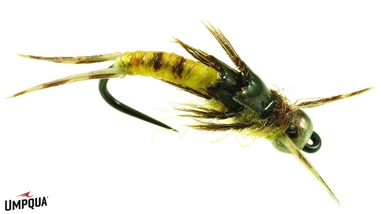 Umpqua Little Yellow Sloan, 12